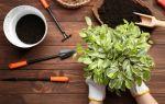 Перечень хороших дней для пересадки комнатных цветов. Как влияет лунный календарь на растения?