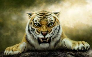 К чему снится тигр — толкование для женщины и мужчины