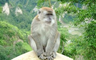 Ночью снится обезьяна. К чему бы это?