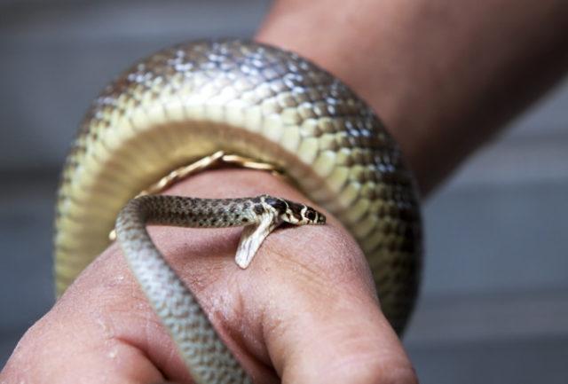 К чему снится укус змеи женщине? Сонник укусила змея